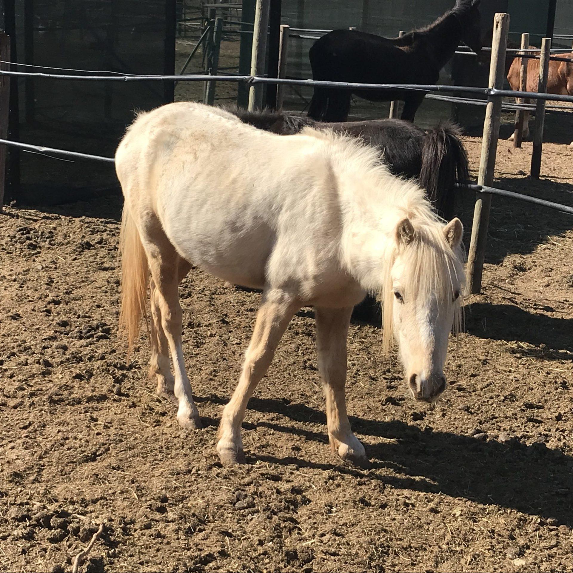 Have a heart equine Sanctuary